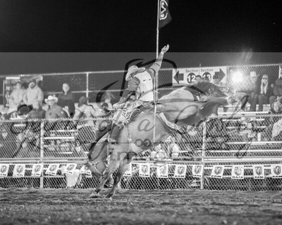 Saddle Broncs