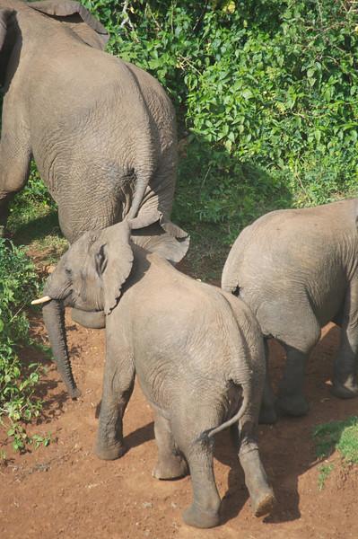 Kenya.Card3.02.2014 525