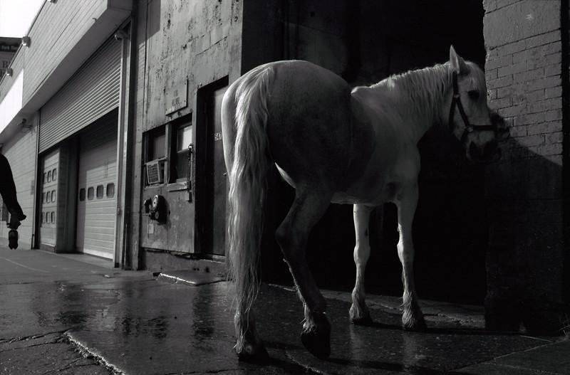 White-Horse-10.jpg