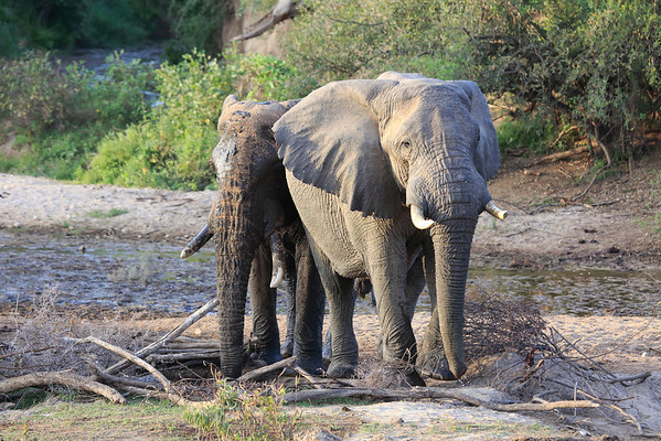 Sarara Elephants Kenya 2014