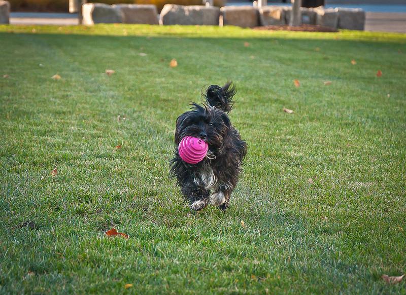 dog run22.jpg