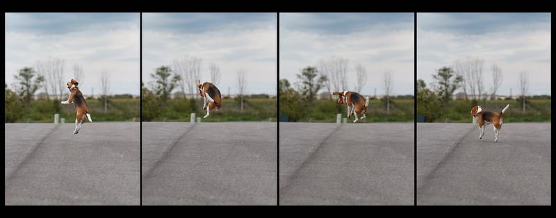 Air Beagle