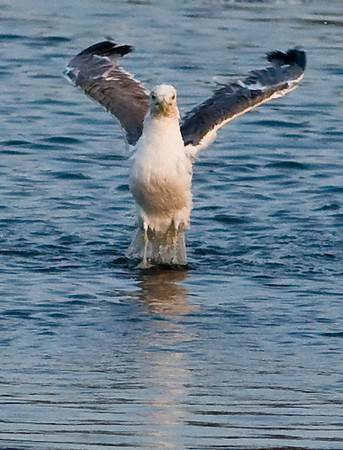 Birds in Charleston Slough