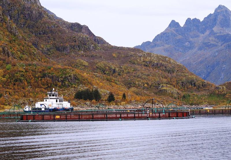 Cruise to Trollfjorden (14).JPG