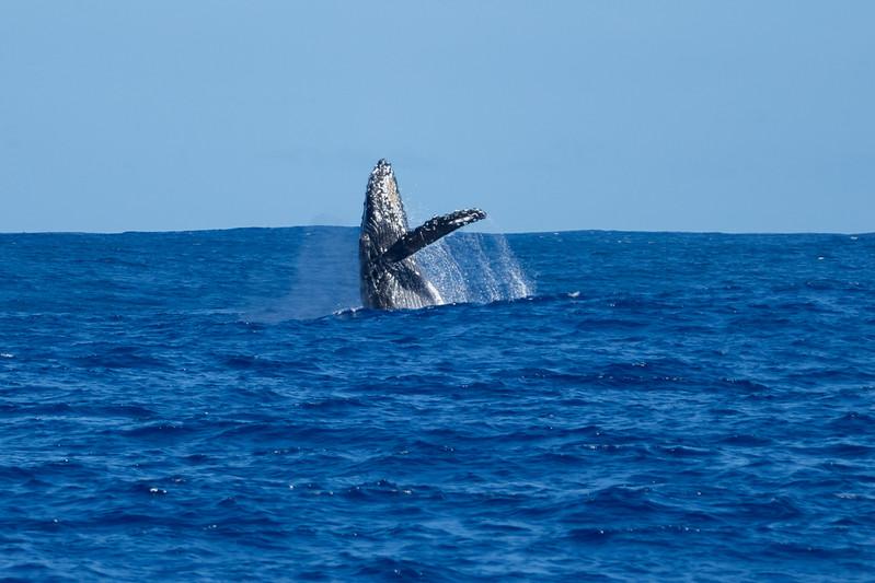 whales-leila-58.jpg