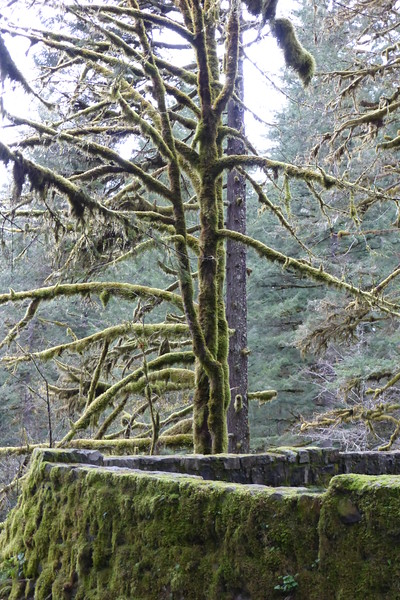 moss covered tree and rock wall