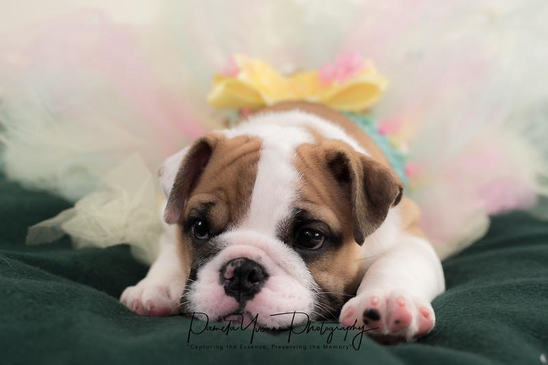 Michelle's newest puppy-5517.JPG