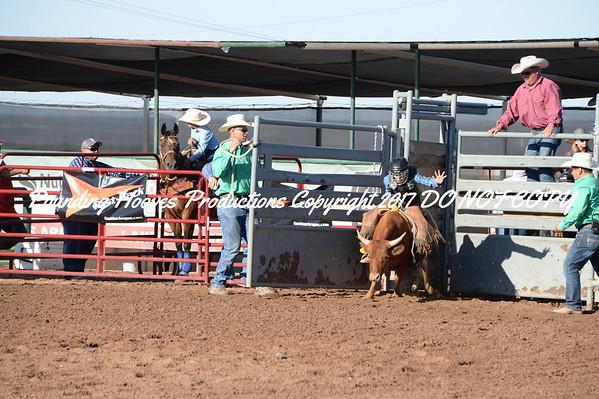 Nov Steers