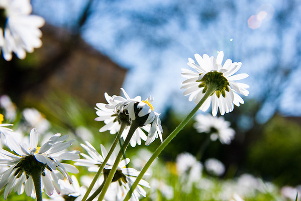 100425 pushing daisies