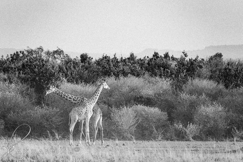 Safari-2ofaKind-027.jpg