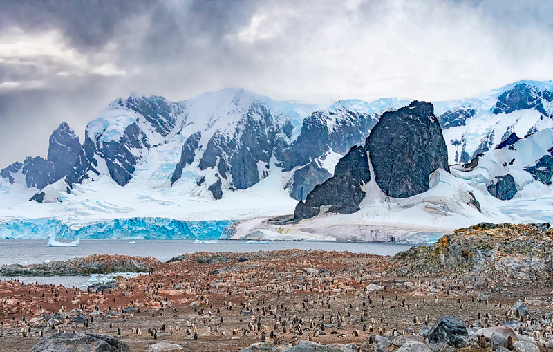 Penguins_Gentu_Cuverville Island_Antarctic Peninsula-13.jpg