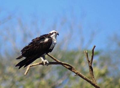 Birds on Tarcoles River