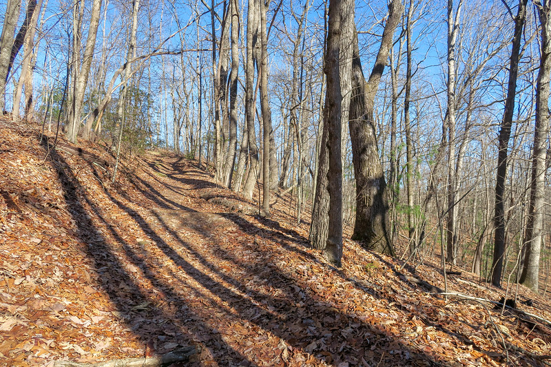 Coldspring Branch Trail -- 3,050'