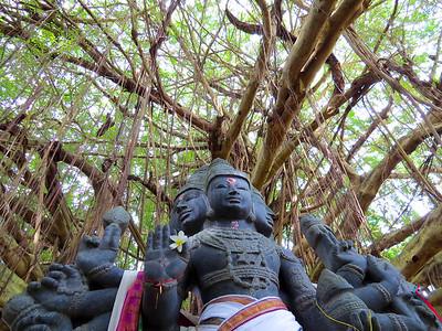 Hawaii Gallery