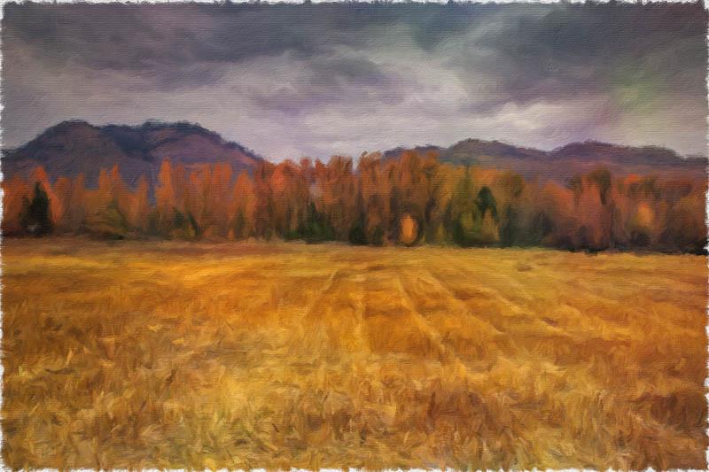 October 18 - Fall foliage.jpg