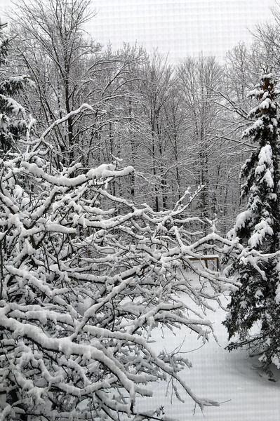 2-16-snow-day-4731.jpg