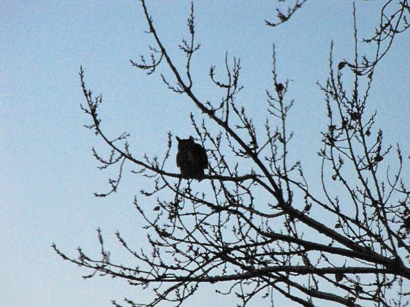 birds (162).jpg