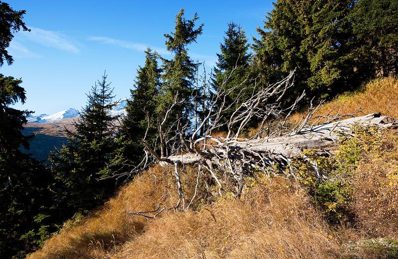 Herbst-im-Rheinwald-D-Aebli-006.jpg