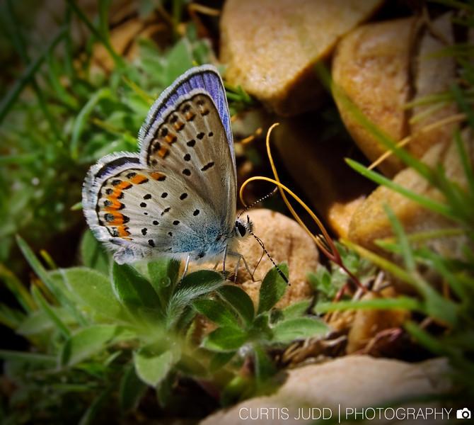 ButterflyMacro090530.jpg