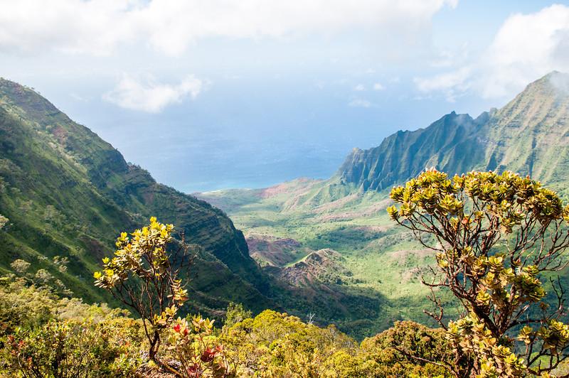 At the Top of Na Pali Coast.jpg