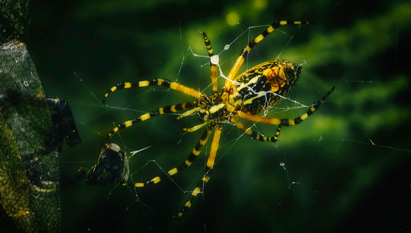Spiders-Arachnids-033.jpg