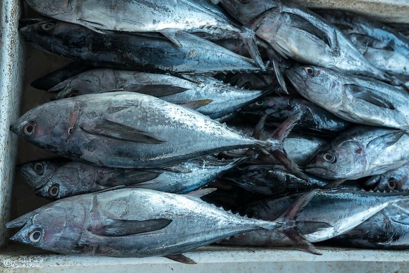 DSC04831- fish market - Muscat.jpg
