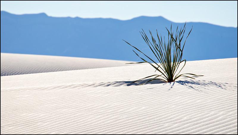 110.Joyce Burzloff.2.White Sands in November.jpg