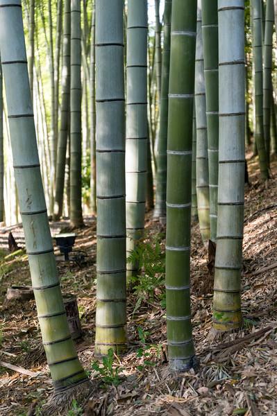 Bamboo grove, Kodaiji, Kyoto