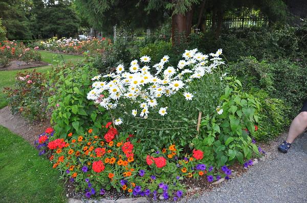 Seattle Rose Garden