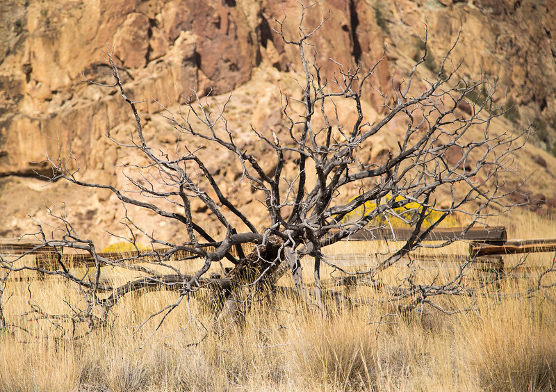 Dead Tree at Smith Rock State Park, Central Oregon