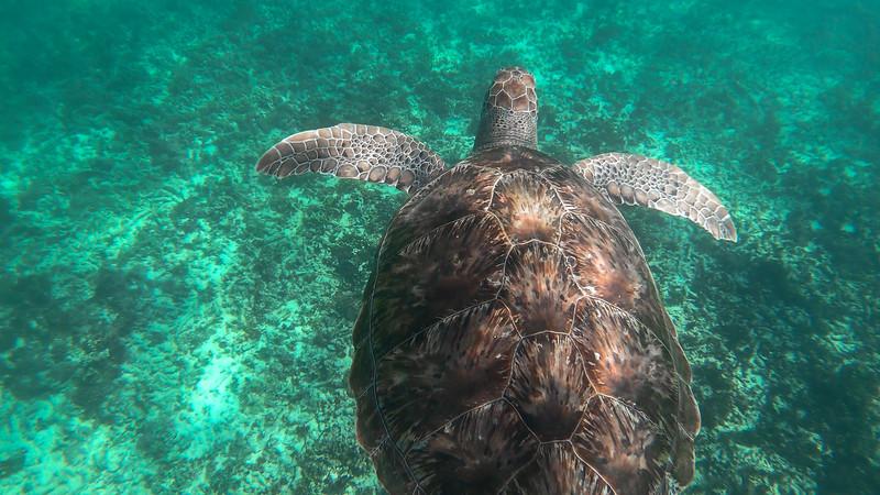 Sea Turtles (1 of 5).jpg