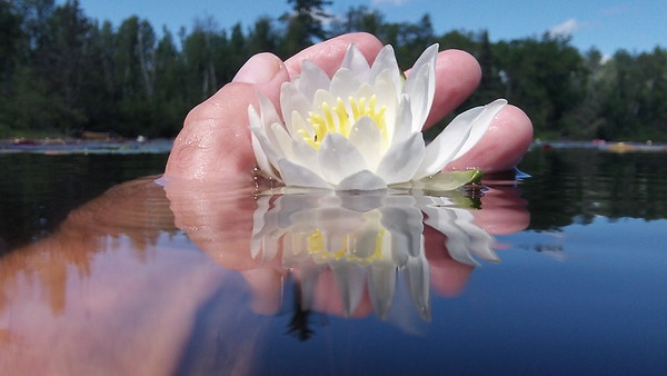 20130808_WATER LILY AT EAST BEARSKIN LAKE.JPG