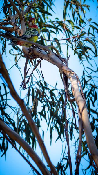 010419   birds  _4.JPG