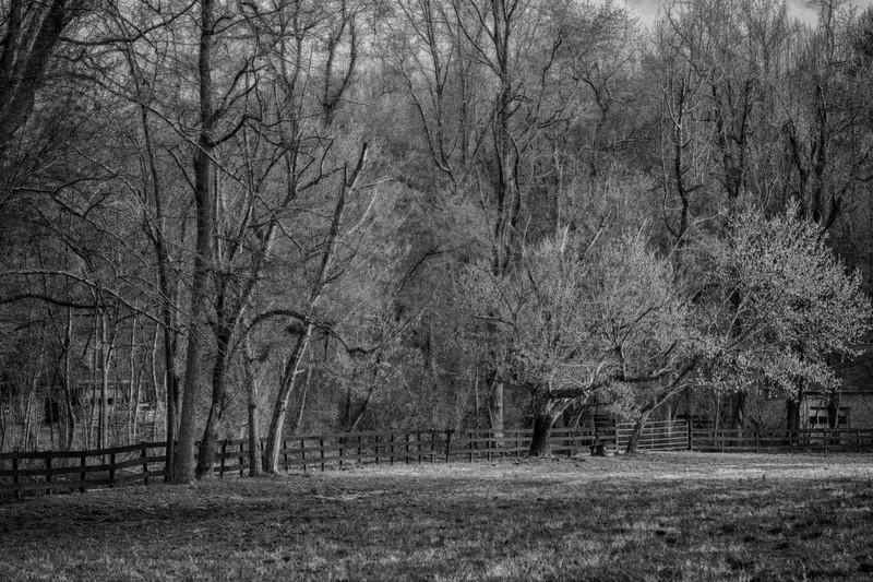 Fence w. Trees B&W S44A3427.jpg