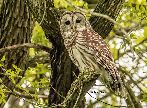 Owl_DWL0022.jpg
