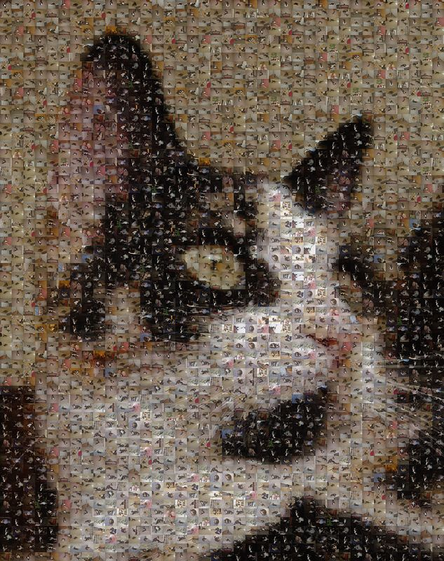 Mosaic made up of about 2,500 pictures of Abby