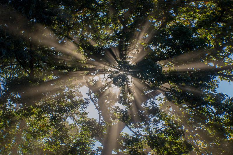 168_LightingTrees.jpg