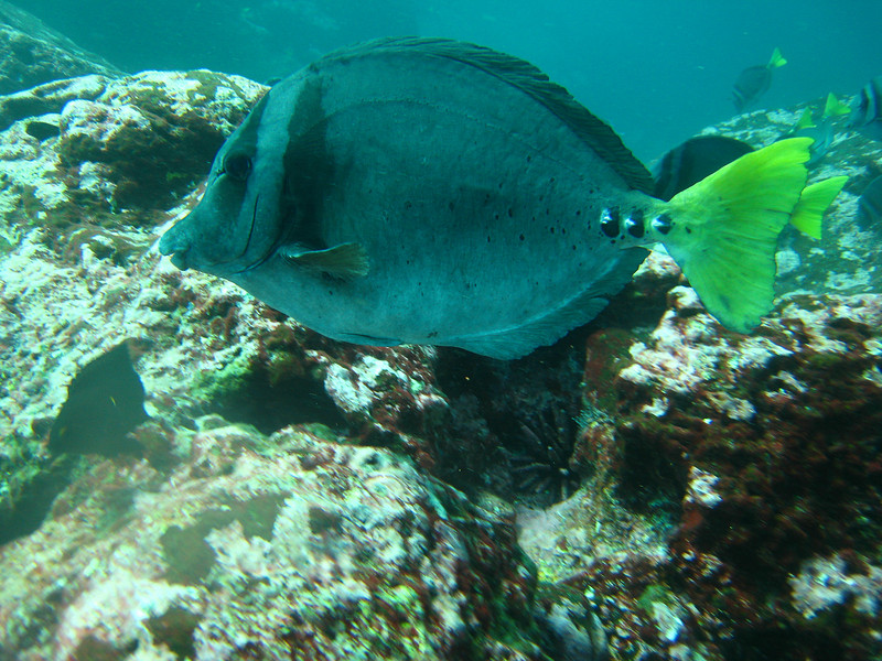 Diving in the Galapagos (384 of 392)