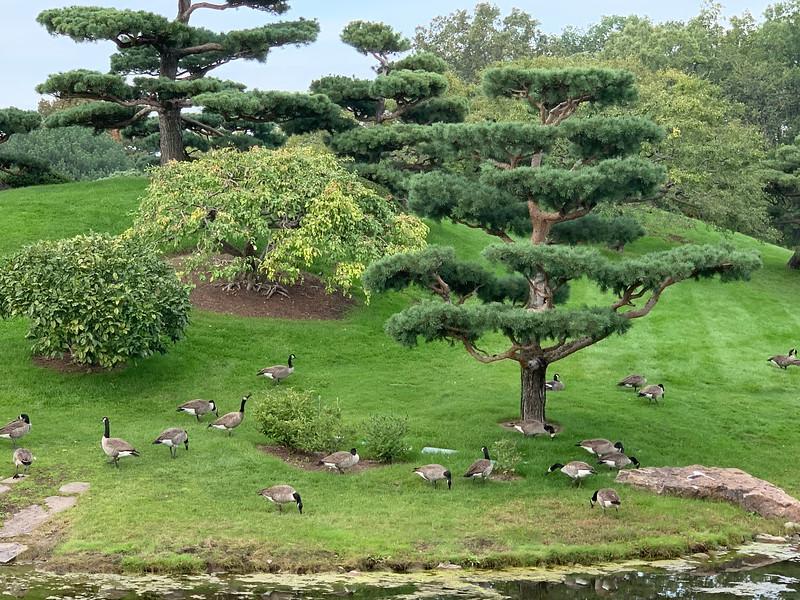 Chicago Botanic Garden 143.jpg