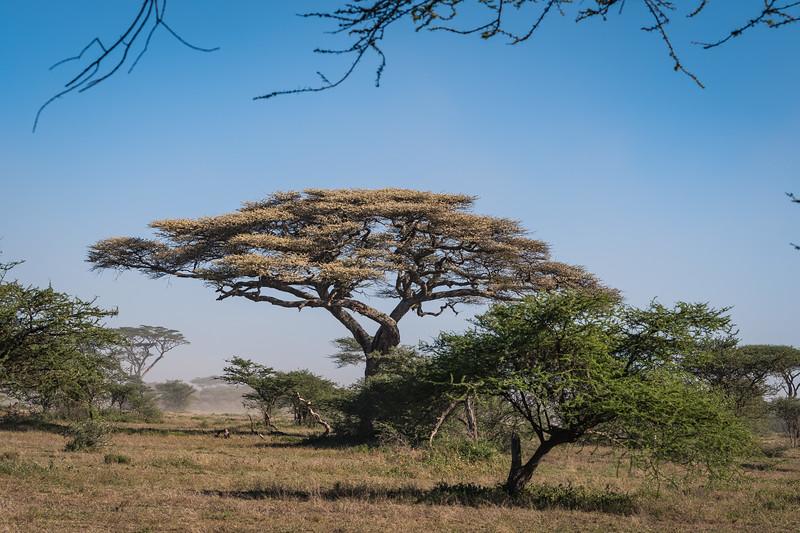 Tanzania_Feb_2018-184.jpg