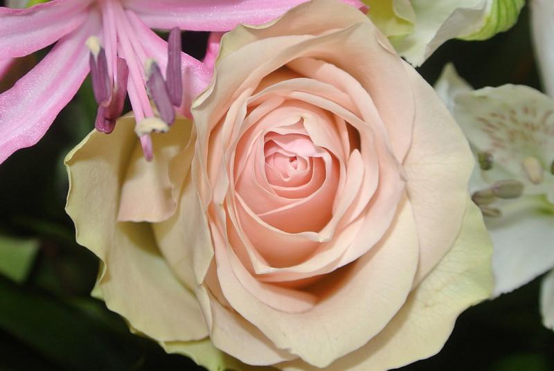 'RONNY & PASCAL' Bloemen voor Maintje 2012-11-11 14.JPG