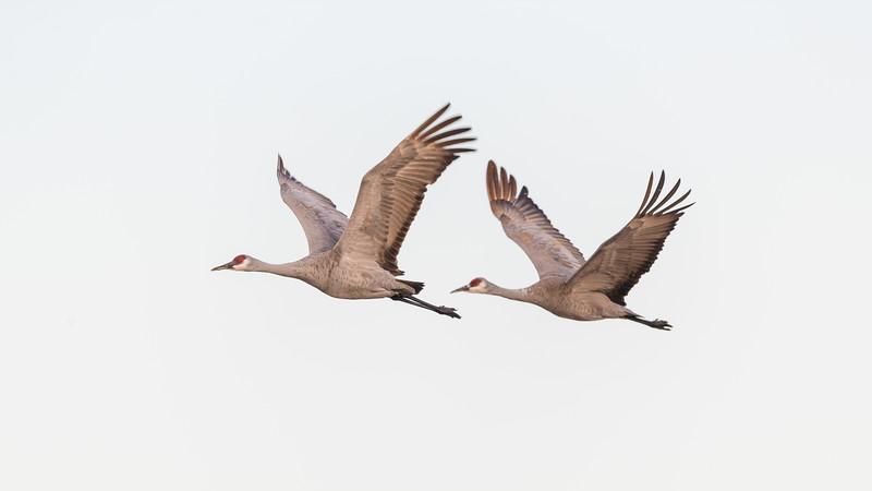 Crane18-5841.jpg