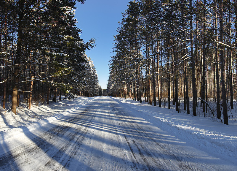 Road of Shadows - Kettle Moraine State Forest (Northern Unit)