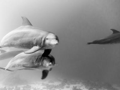 20130605 Dive, Siyul Kebir