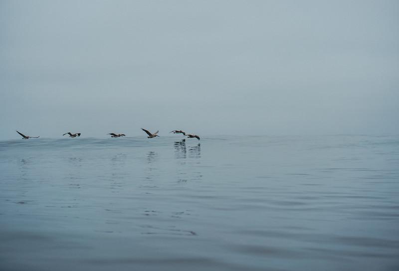 Beacons dolphins-15.jpg