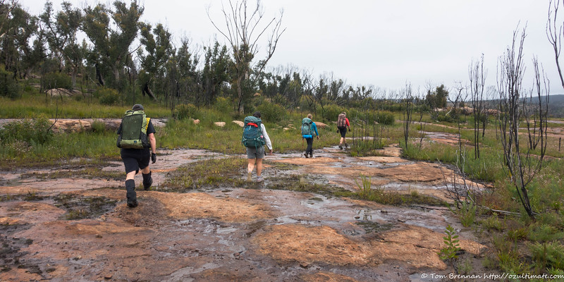 Easy walking through burnt country