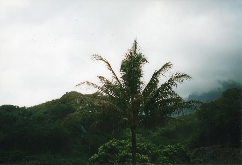 0530 - Iao Palm & Clouds