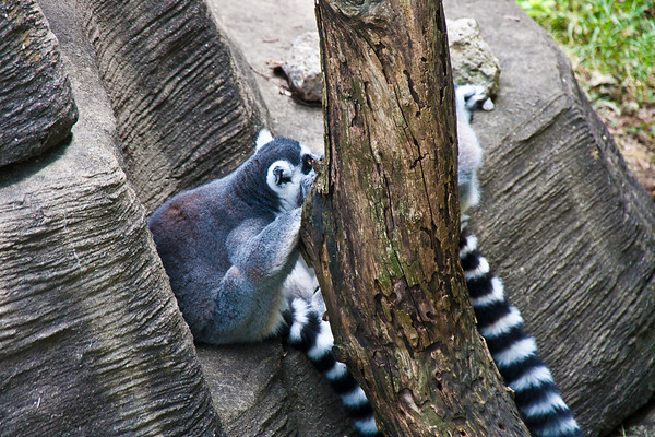 Louisville Zoo July 2011