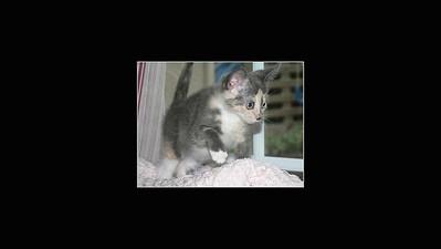 Princess Mimi Belle Meow Meow - 9-07 - 1-21-17