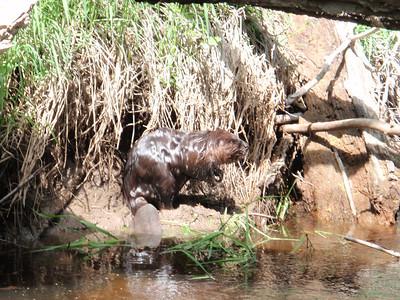 Minesing Swamp, May 2013